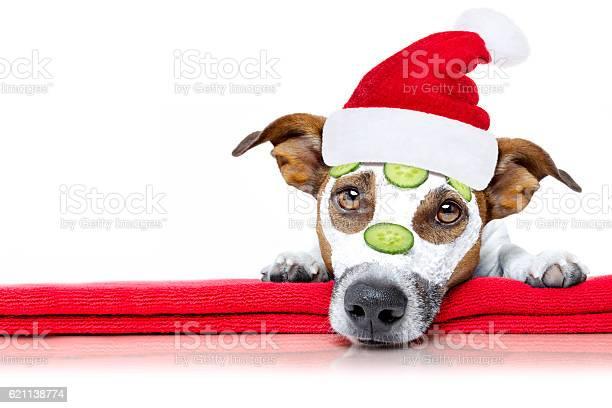 Dog with a beauty mask wellness spa picture id621138774?b=1&k=6&m=621138774&s=612x612&h=53txim5diyuggezklkkia77qvszg9l6ciifihwr1r6u=