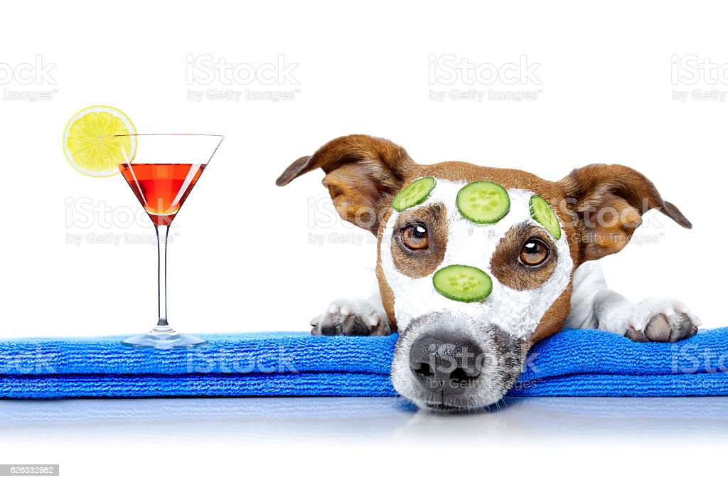 dog with a beauty mask wellness spa stock photo