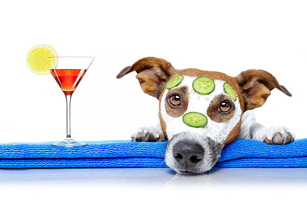 dog with a beauty mask wellness spa stock photo