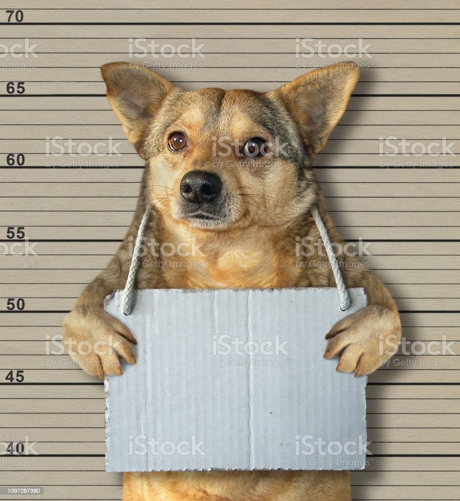 Dog with a blank sign in a jail stock photo