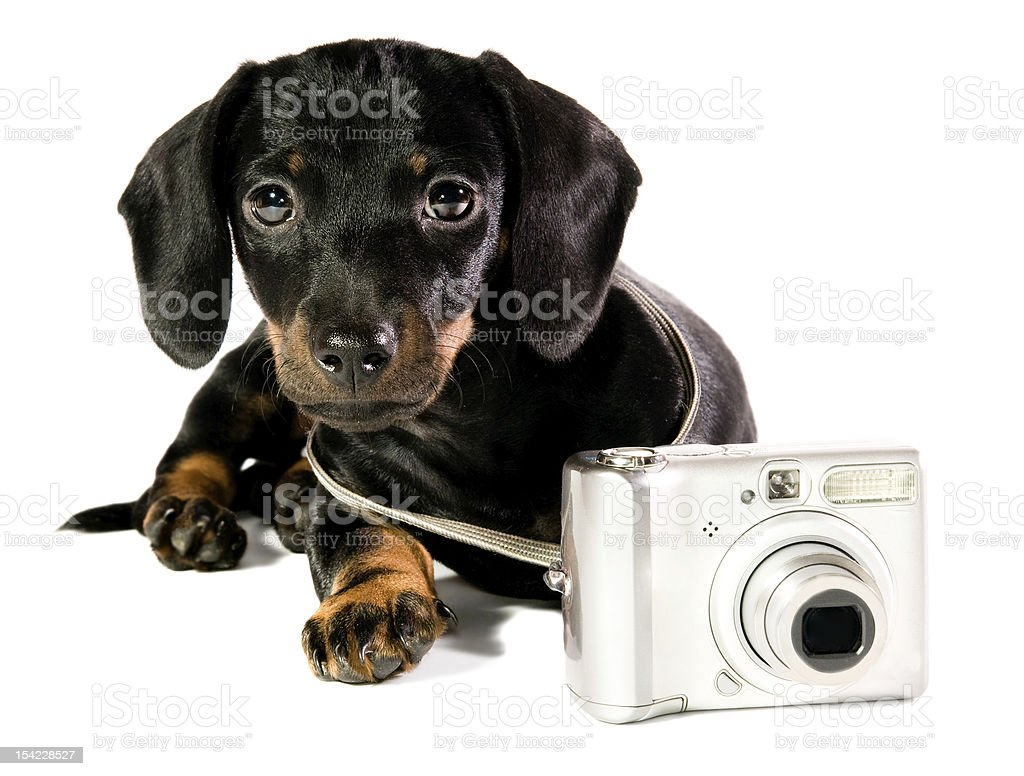 dog  with a camera stock photo