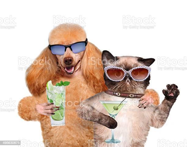 Dog with a cat on vacation picture id495630875?b=1&k=6&m=495630875&s=612x612&h=ebcor5rwklvmea5wyuu3hvzmrvvpywmv9trux vuvho=