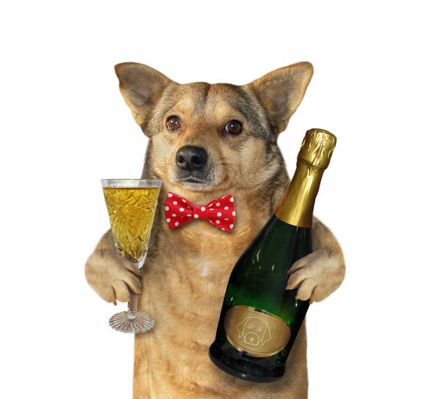 Dog with a champagne glass stock photo