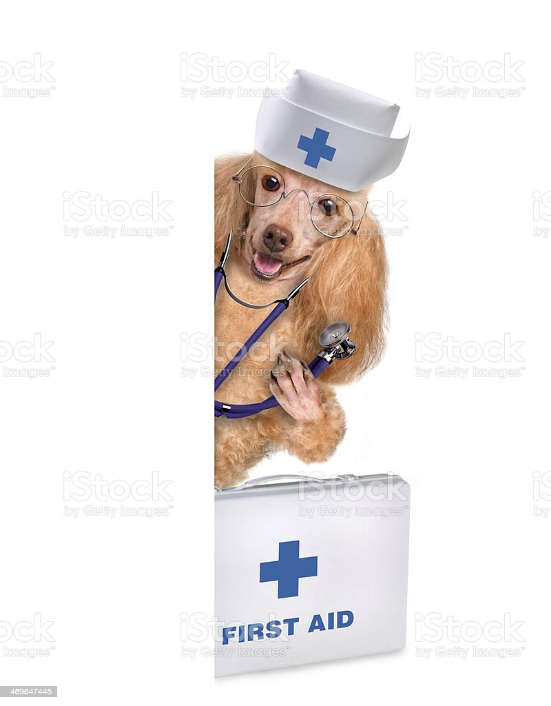 Dog with a first aid kit royalty-free stock photo