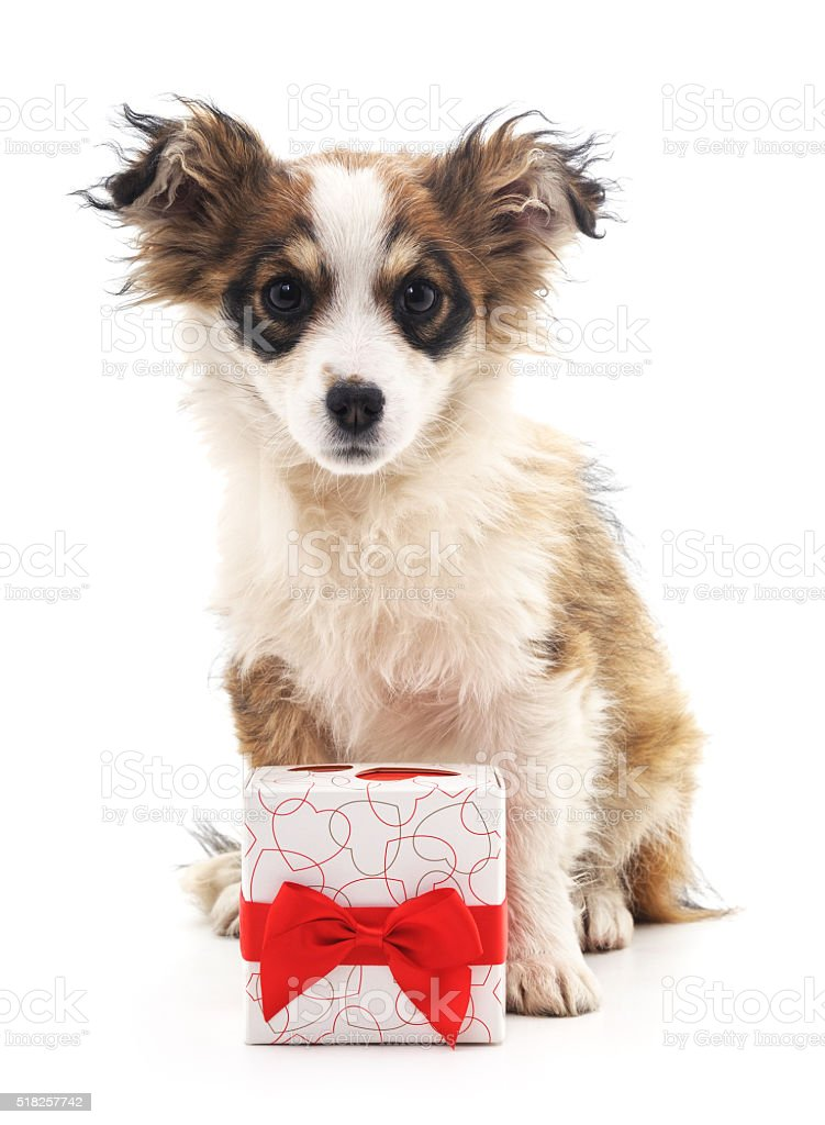Dog with a gift. stock photo