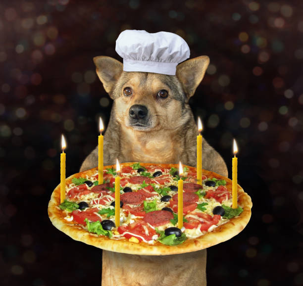 Dog with a holiday pizza stock photo