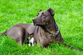 istock Dog with a kitten lying on the grass 1010221034