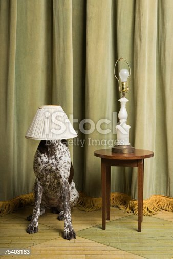 istock Dog with a lampshade on its head 75403163