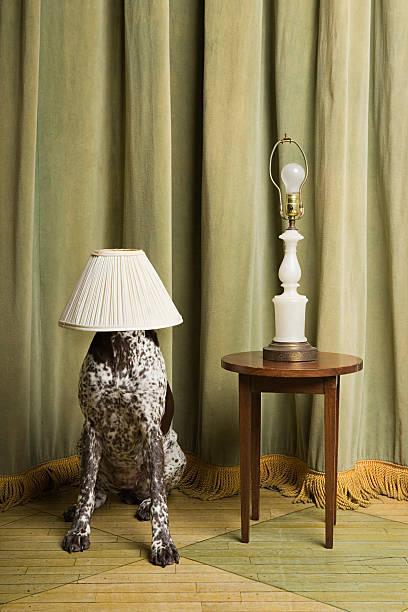 Perro con una lampshade en su cabeza - foto de stock