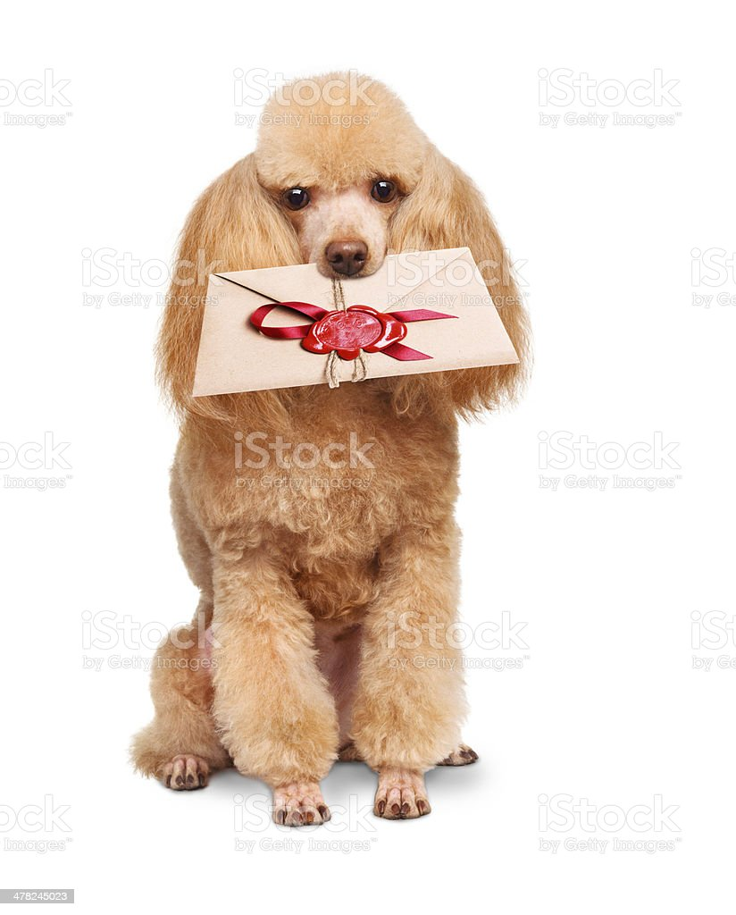 Dog with a letter stock photo