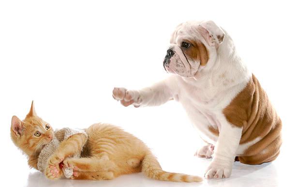 Dog with a paw pointing towards an orange cat picture id146898857?b=1&k=6&m=146898857&s=612x612&w=0&h=8ahyih4er12tg3rogs ei9cnd9nvj7vrf6rmyn4kwou=
