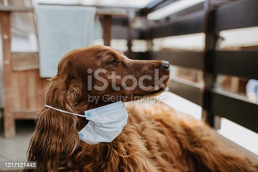 dog with a protective mask on his face