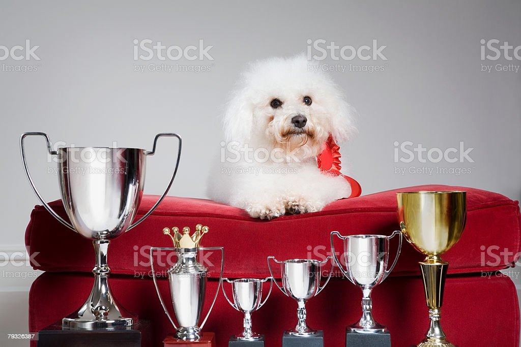 Dog with a row of trophies royalty-free 스톡 사진