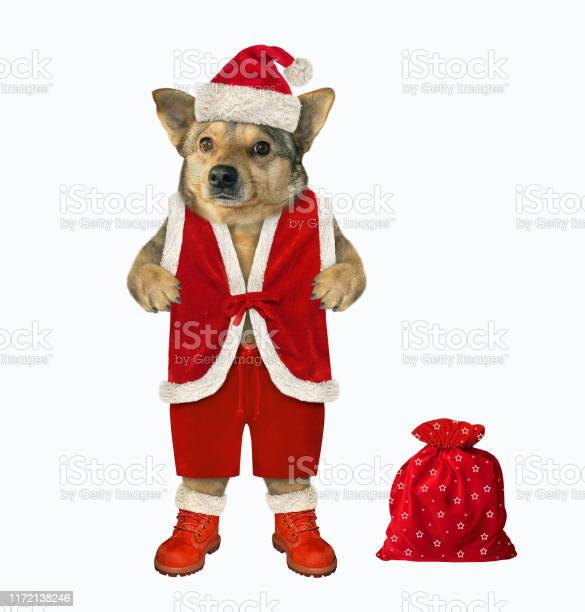 Dog with a sack of gifts picture id1172138246?b=1&k=6&m=1172138246&s=612x612&h=0p0kmjm3f7gefyhkc4k8gbjsg32hvni0dzgloiy3o0m=