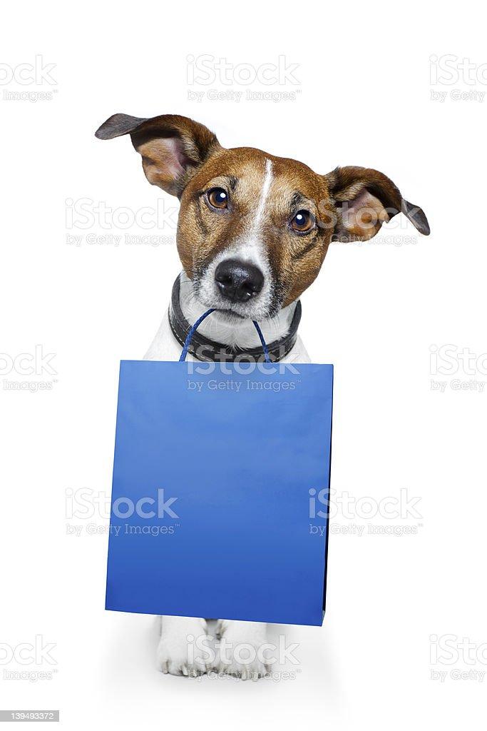 Perro con una bolsa de la compra - foto de stock
