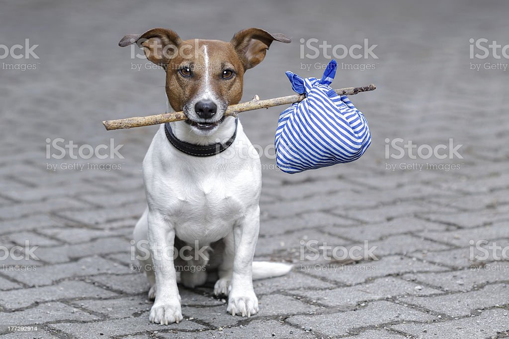 dog with a stick stock photo