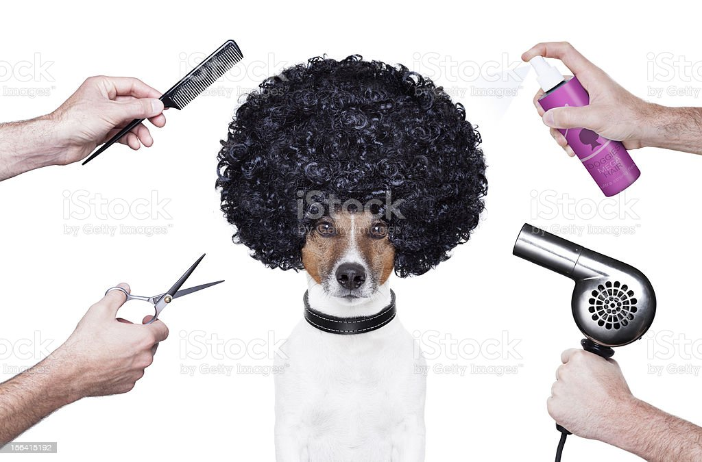 Dog with afro surrounded by hands holding grooming supplies stock photo