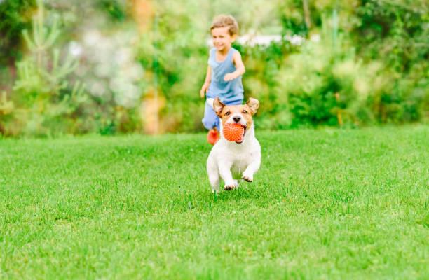 chien avec boule dans la bouche va de kid jeu chase à la pelouse de l'été - pelouse photos et images de collection