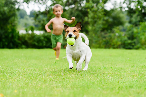 Dog with ball running from child  playing catch-up game