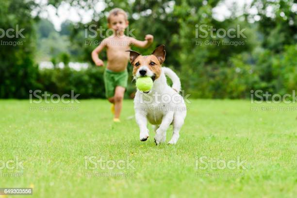 Dog with ball running from child playing catchup game picture id649303556?b=1&k=6&m=649303556&s=612x612&h=y8t2o4vxwmb1ioddm7oimgynp6yfzgcykrwgbehuw 0=