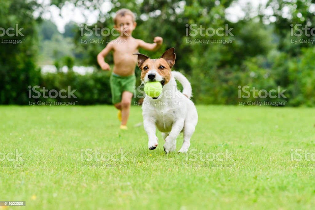 Dog with ball running from child  playing catch-up game stock photo