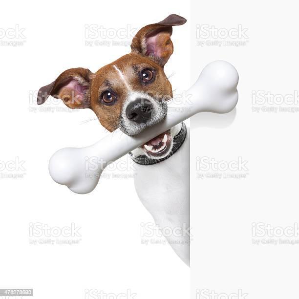 Dog with big bone picture id478278693?b=1&k=6&m=478278693&s=612x612&h=1g5sgcmotzwdwhizlafg vgojt sth7tfxxqcncxrls=