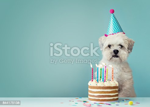 istock Dog with birthday cake 844175138