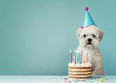 犬の誕生日ケーキ