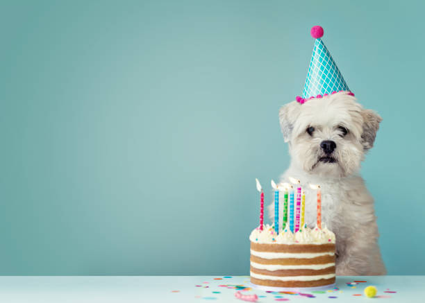 royalty free birthday pictures images and stock photos istock