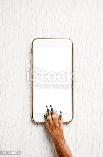istock Dog with blank mobile phone on wooden background 814515676