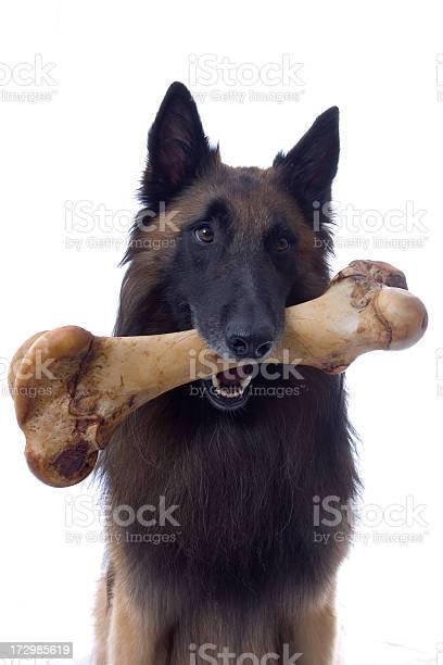Dog with bone picture id172985619?b=1&k=6&m=172985619&s=612x612&h=pjibh69cmtxgzsl2t9csl4sr8jsyyrhybqtxgh4uixc=