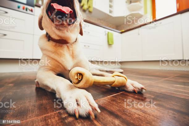 Dog with bone picture id811441840?b=1&k=6&m=811441840&s=612x612&h=n6xay qokcb1wsljw1goypxd4pp2hn4gojdjmnxk 0s=