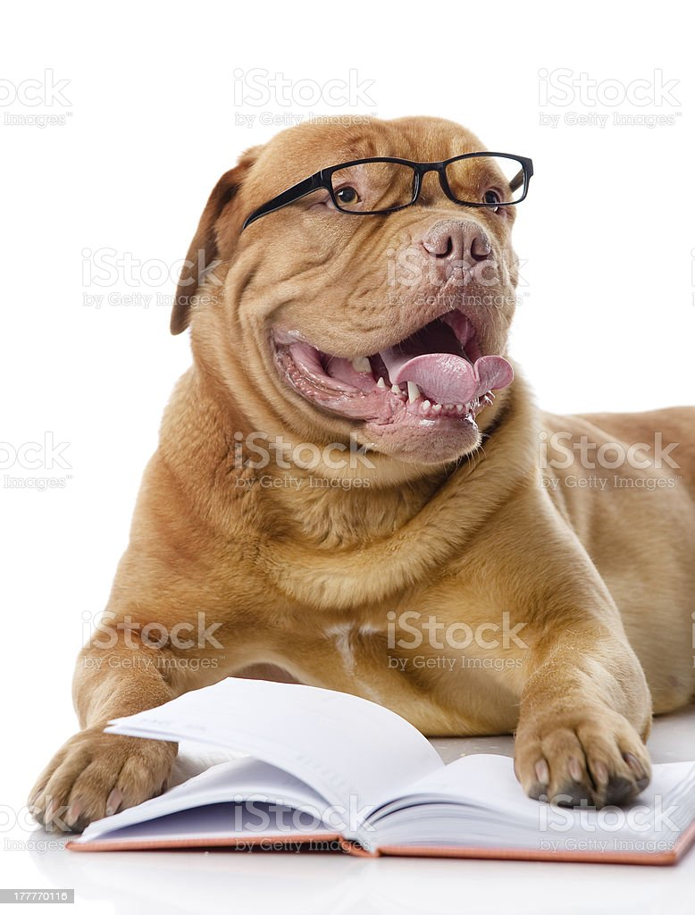 dog with book royalty-free stock photo