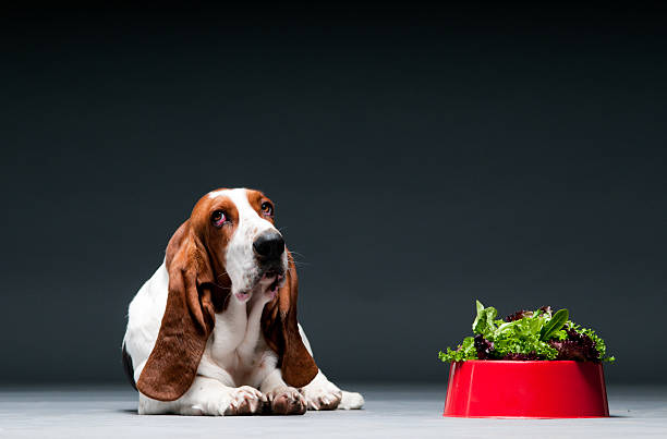 Dog with bowl of lettuce stock photo