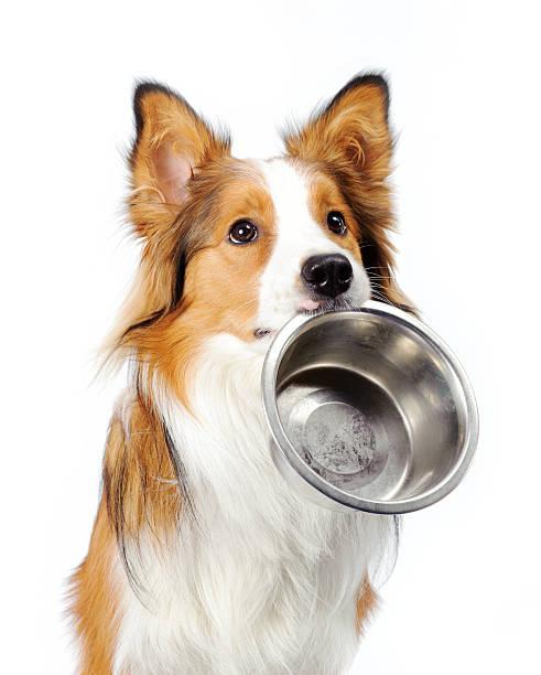 hund mit schüssel - hundenapf stock-fotos und bilder