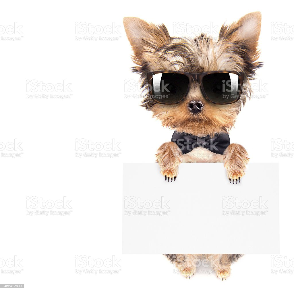 dog with bunner isolated stock photo