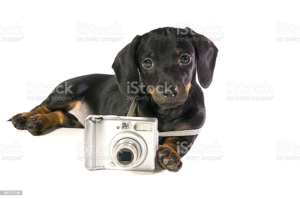 dog  with camera royalty-free stock photo
