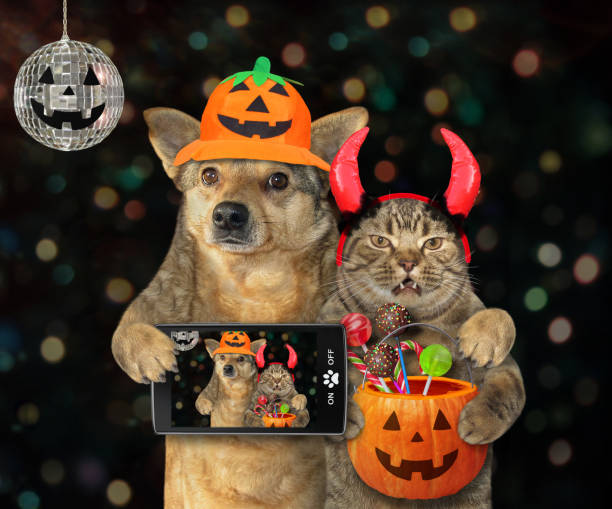 Dog with cat makes selfie for Halloween The dog with a smartphone and the cat in devil horns with a pumpkin bucket with candies made selfie together at the Halloween party. pet clothing stock pictures, royalty-free photos & images