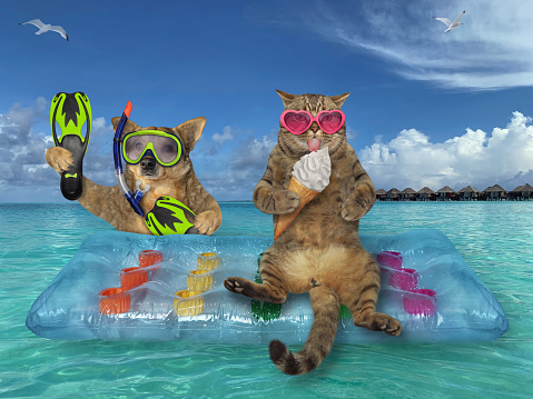 The beige cat and the dog are relaxing on a blue air bed in the sea in the Maldives. The first in a heart shaped sunglasses eats a ice cream cone, and the second in diver equipment.