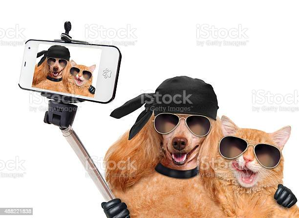 Dog with cat taking a selfie together with a smartphone picture id488221838?b=1&k=6&m=488221838&s=612x612&h=wjcxakprpbh4p8sw d6grqm vg0d2ihcxaxjhgum56g=