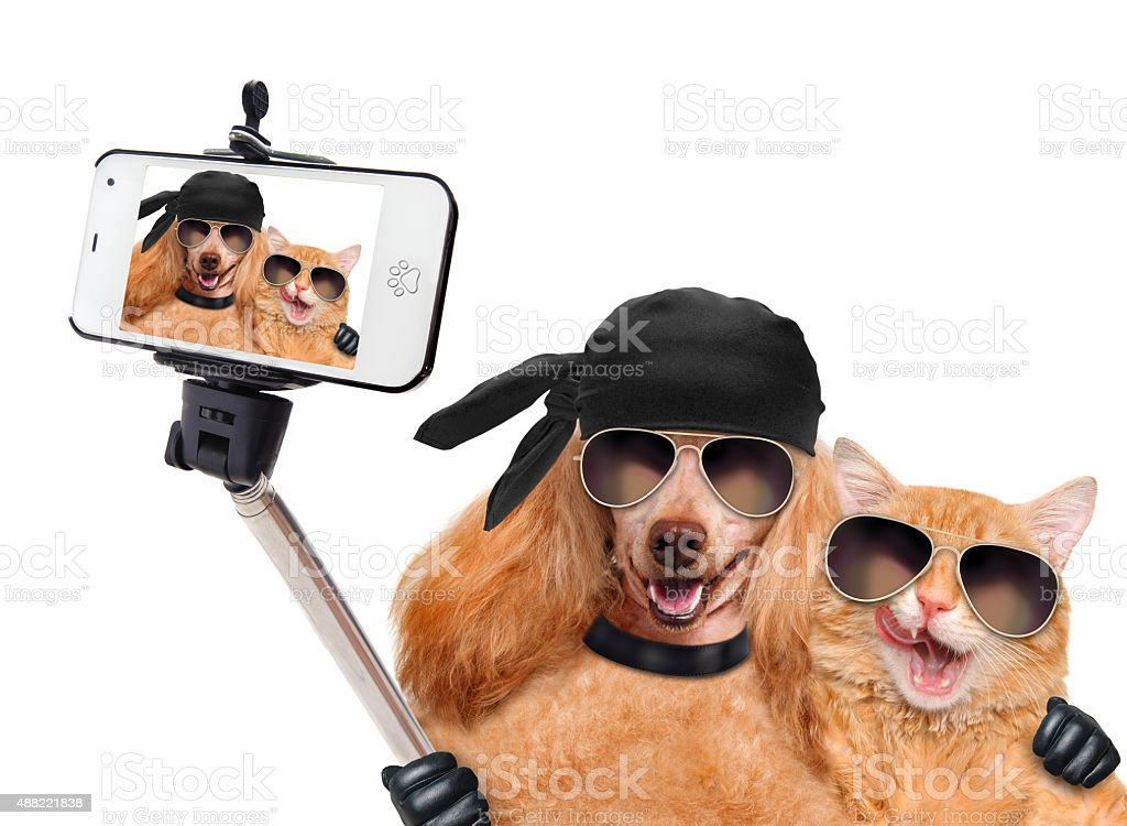 dog with cat taking a selfie together with a smartphone stock photo