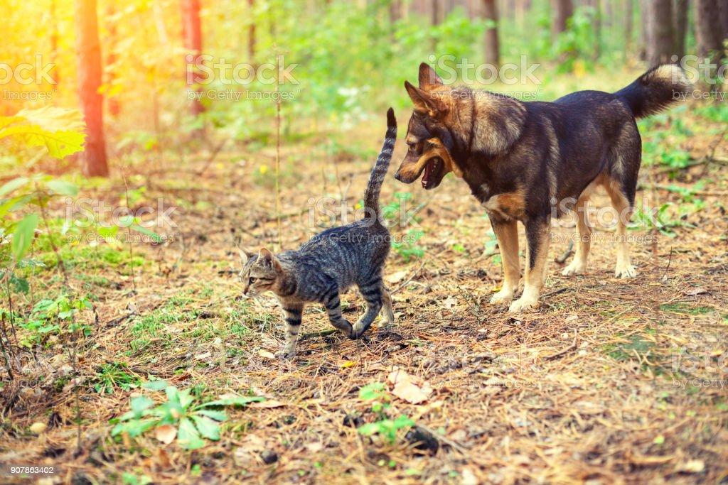 Hund mit Katze im Wald spazieren – Foto