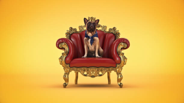 hund mit krone in einem stuhl. 3d-rendering - könig stock-fotos und bilder