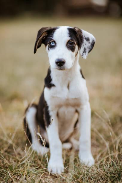 Dog with different colored eyes picture id1128233640?b=1&k=6&m=1128233640&s=612x612&w=0&h=caiqe6cd2lrfuefeapfwla8uq0zimpz0kemwhwxtn6u=