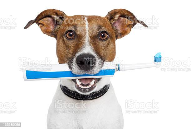 Dog with electric toothbrush picture id155969058?b=1&k=6&m=155969058&s=612x612&h=guwrp9cmzw903q rf16ux6ty1csv7xrh8vbtdlvqbsm=
