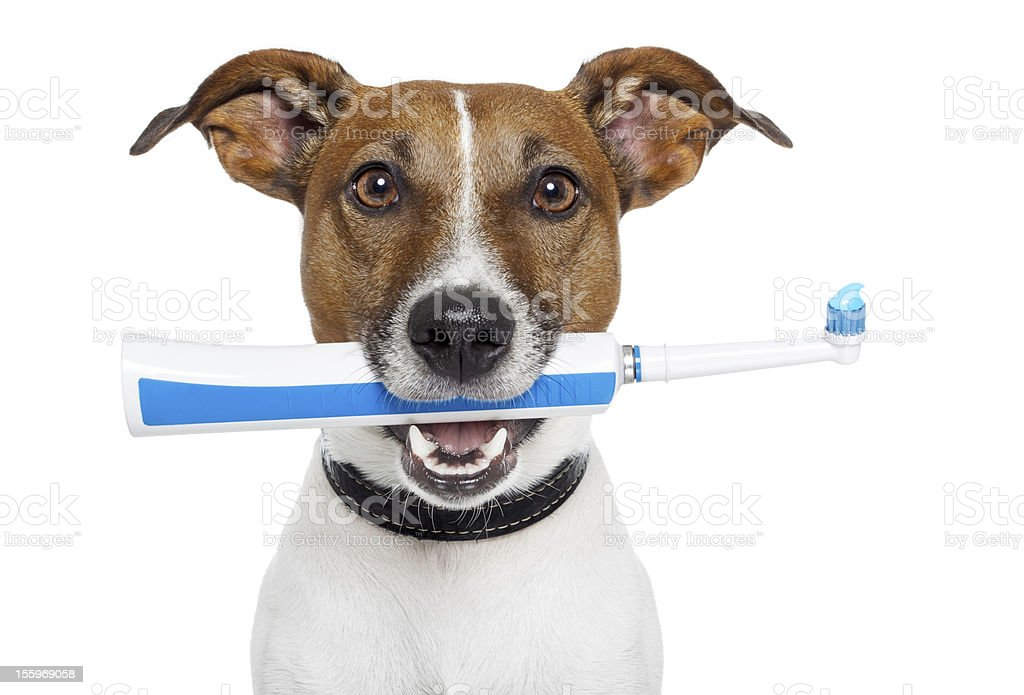 dog with electric toothbrush stock photo