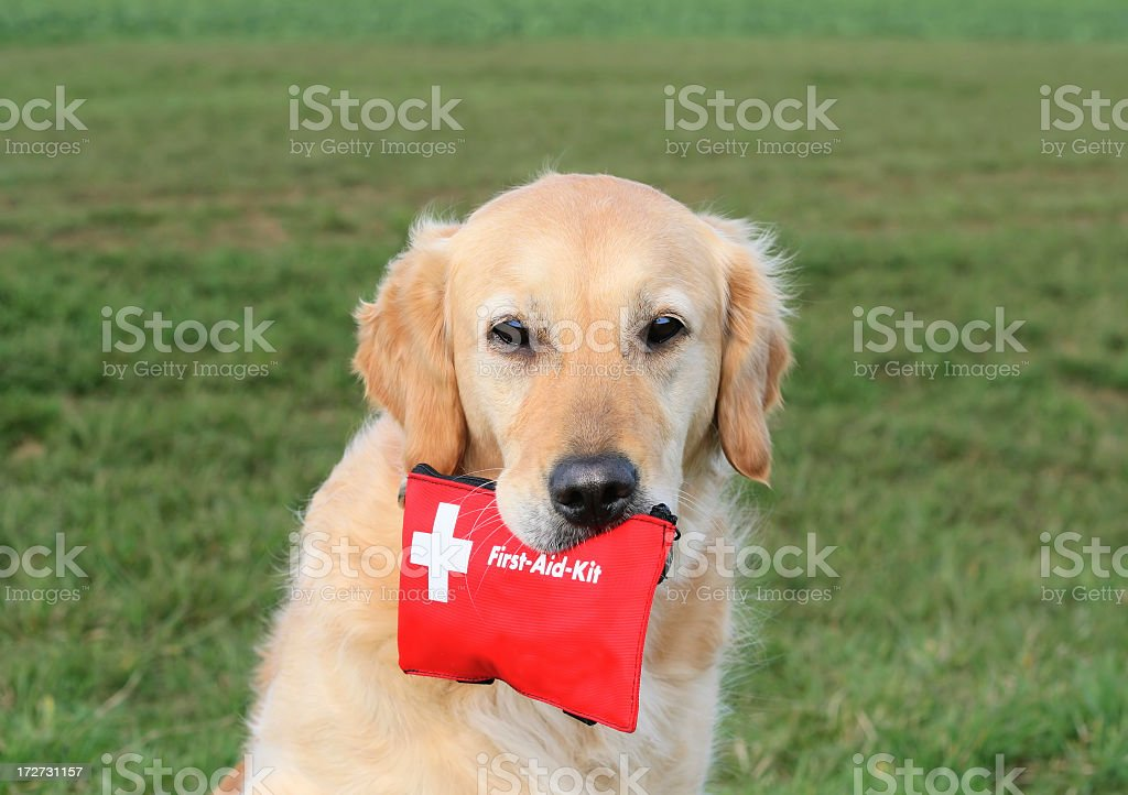 Dog with First-Aid-Kit royalty-free stock photo