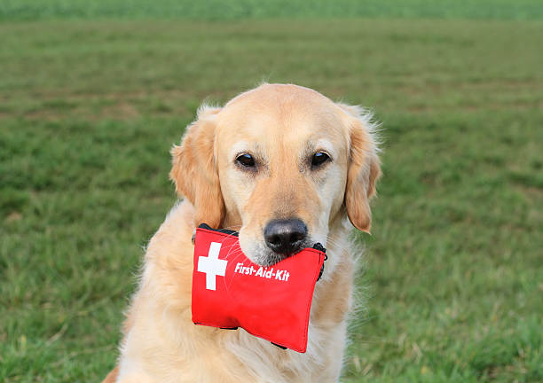 Dog with First-Aid-Kit stock photo