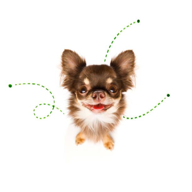 Hund mit Flöhen, Zecken oder Insekten – Foto