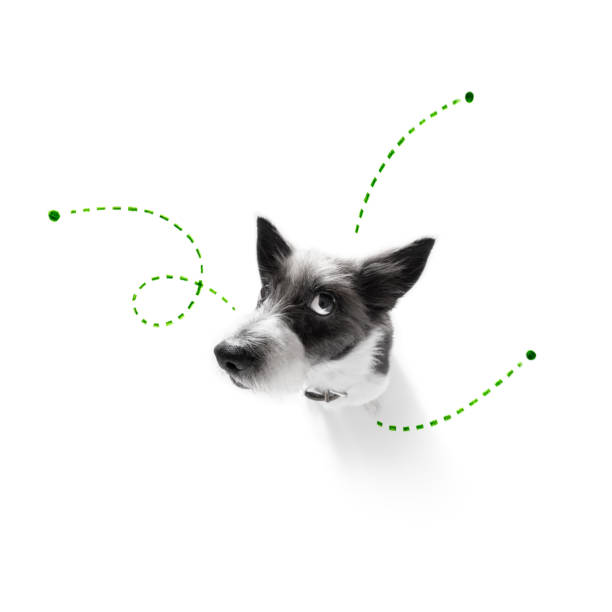 dog  with fleas, ticks or insects stock photo